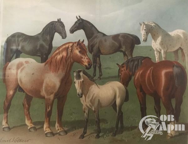 """Литография """"Лошади"""""""