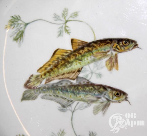 Тарелка с изображением рыб и насекомых